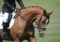"""Un cavallo """"nel contatto"""""""