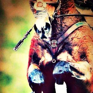 sotto-lo-stesso-cielo-cavallo