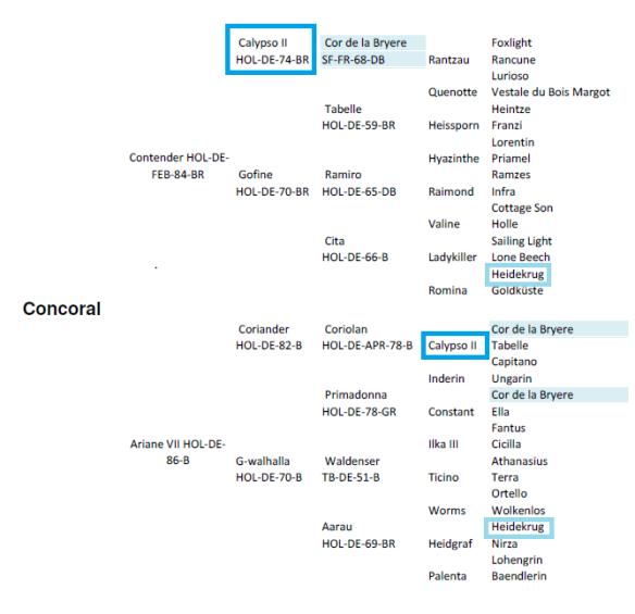 concoral_genealogia