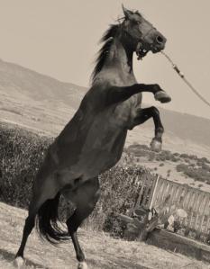 Stagione di monta 2015: a breve tutti gli stalloni dell'Istituto