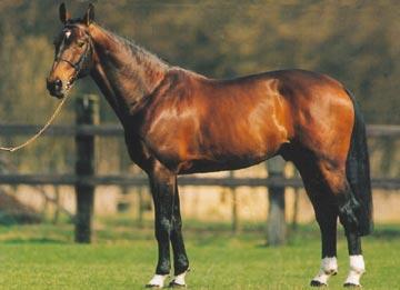 kannan-stallion-kwpn