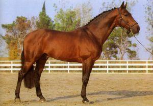 Horse_Avenir_di_San_Patrignano