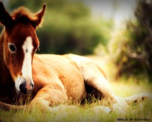 cavallo-contro-stress