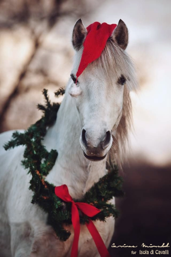 Horse_merry_christmas